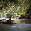Vägen till Borneos hjärta – del 2